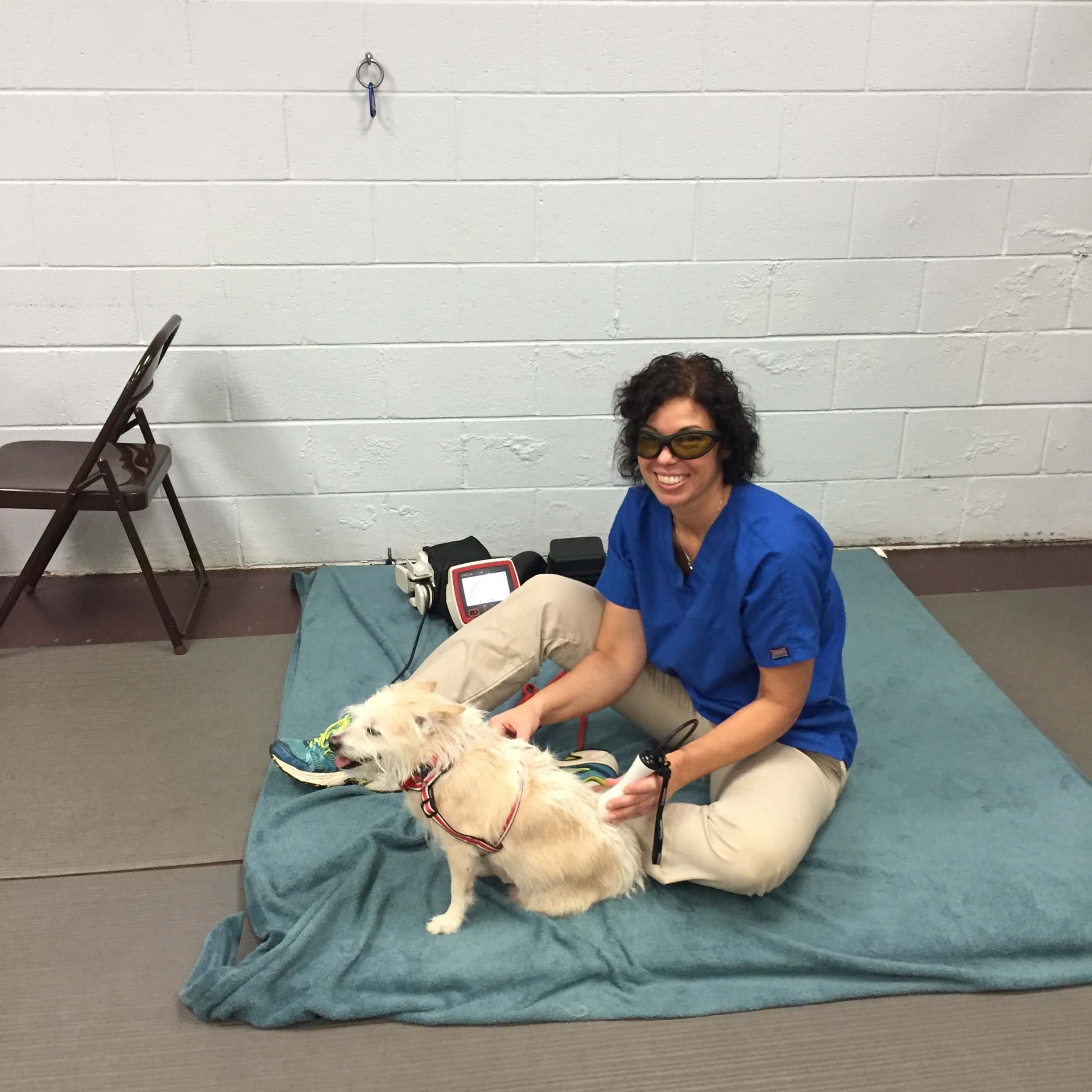 laser therapy_dog_veterinary laser therapy
