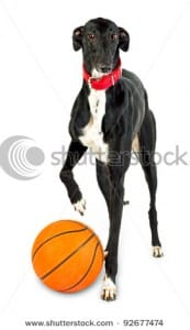 Stock photo dog playing with ball
