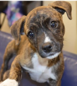SPCA puppy at Glenwood