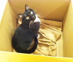 baxter cat in box