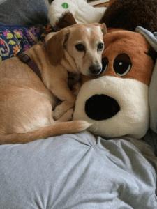 dog laying on dog pillow