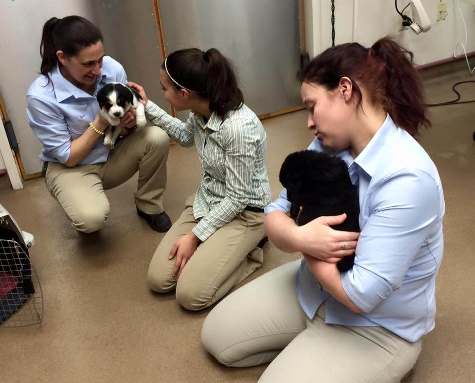 staff at care first animal hospital