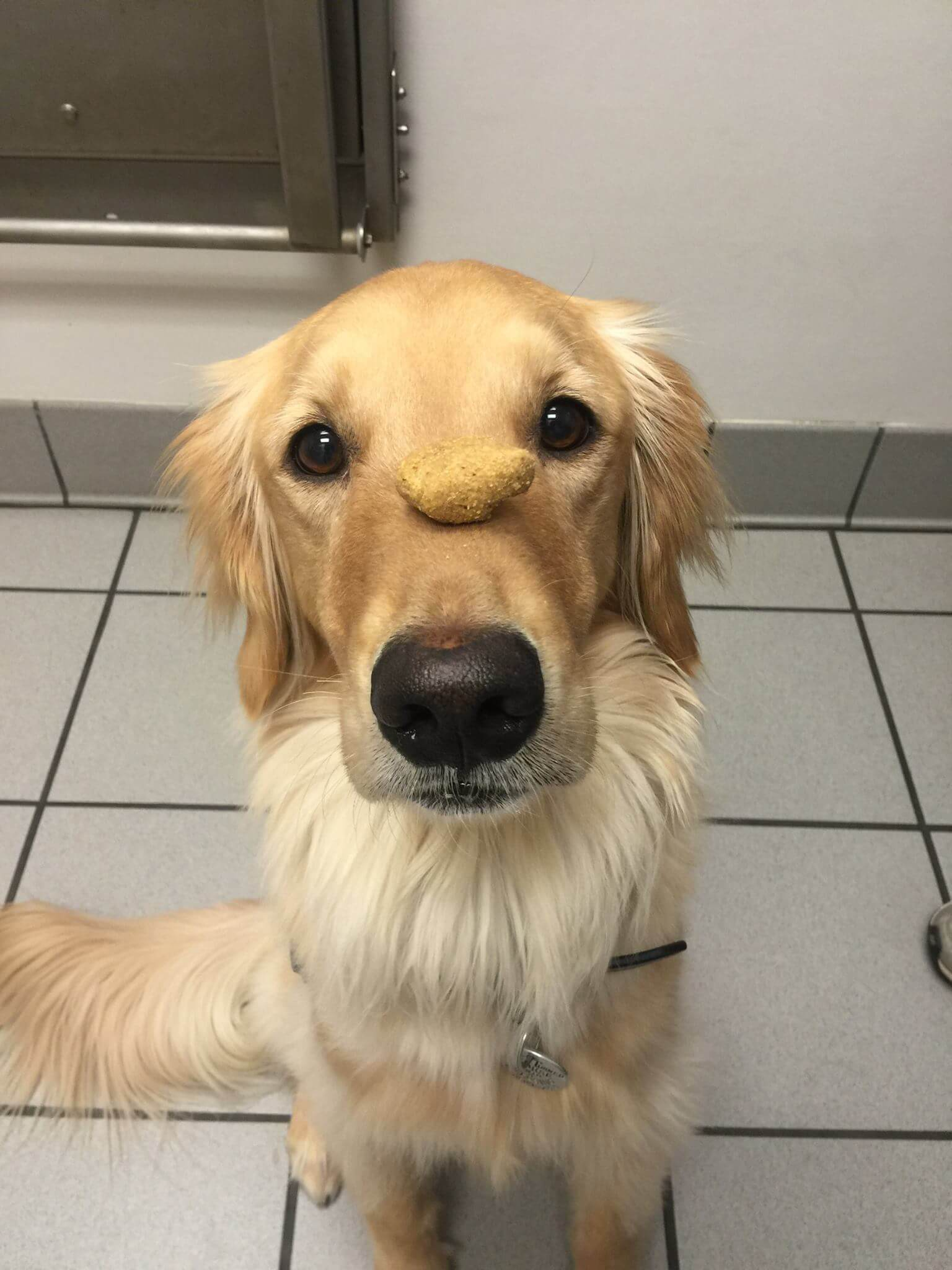 dog in dog training classes with a treat on his nose