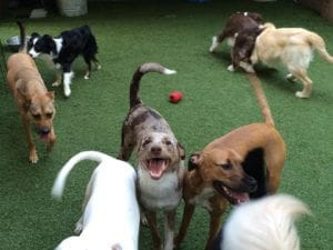 Dogs playing around