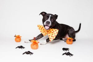 halloween pet safety