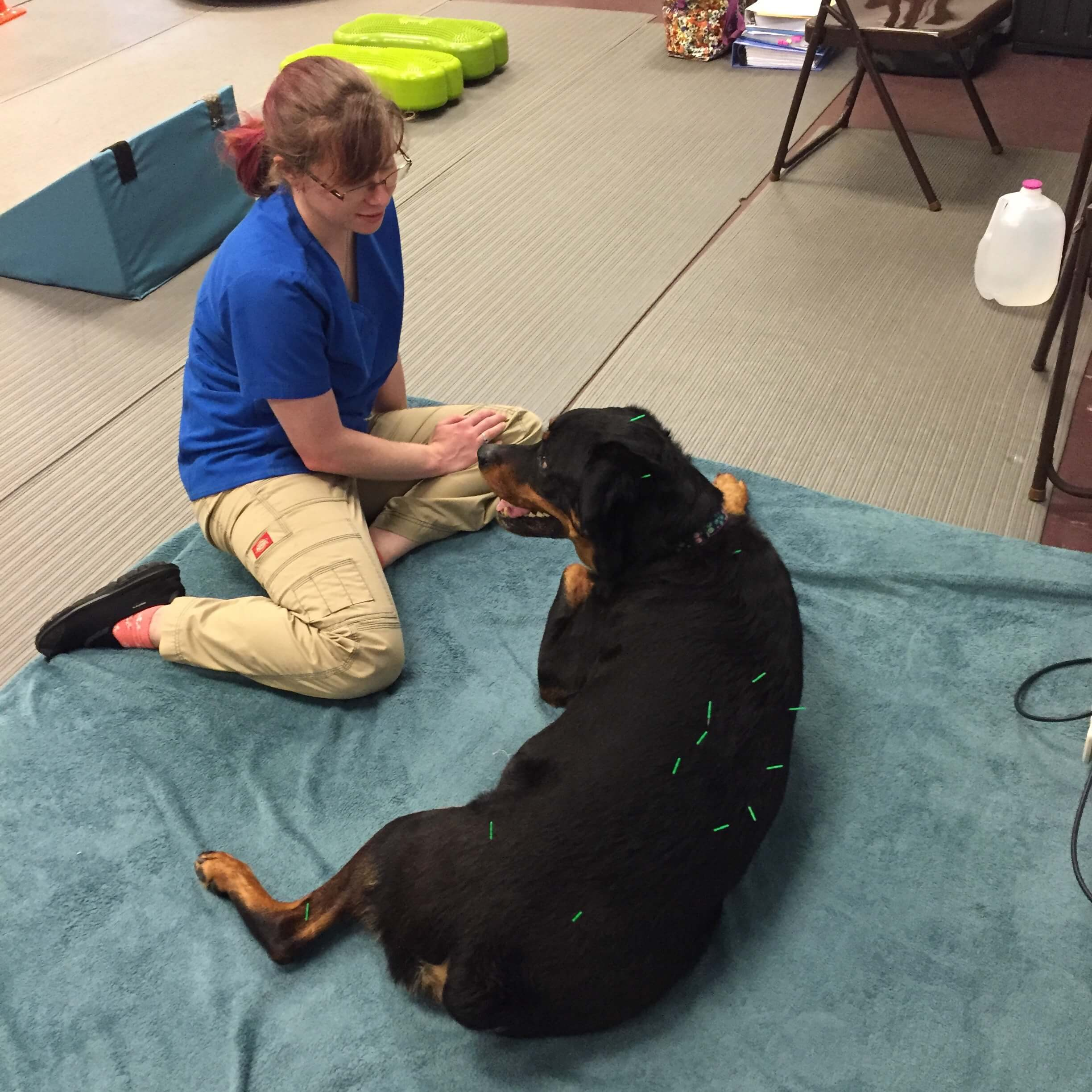 veterinary acupuncture_peak pet performance