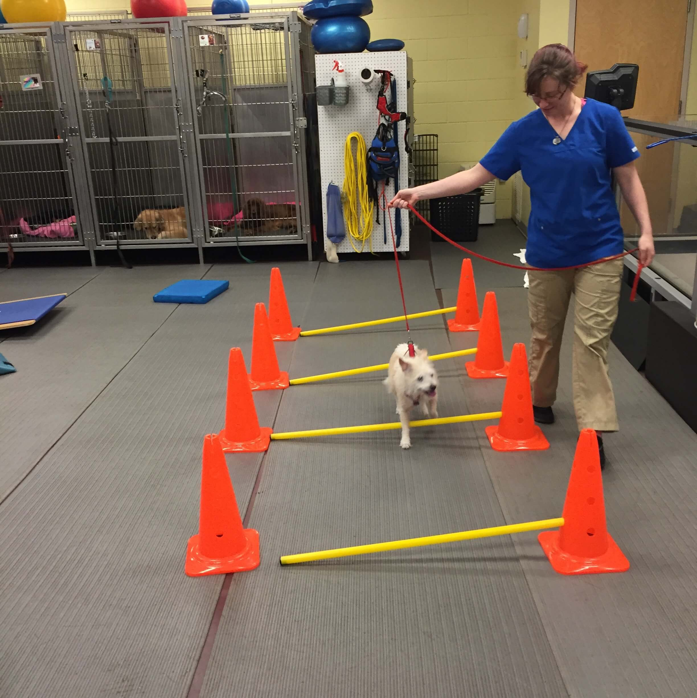 pet physical therapy_pet rehabilitation