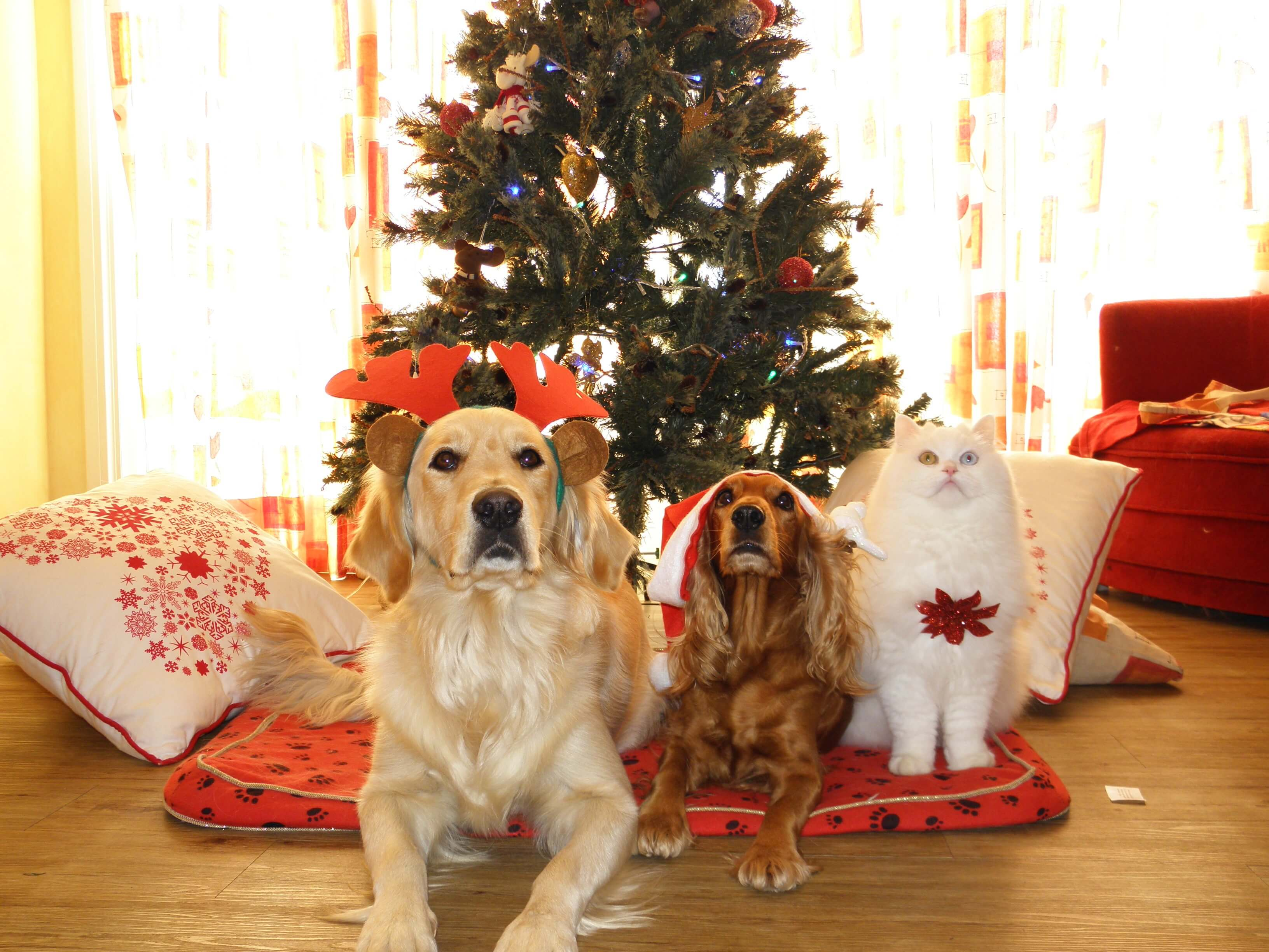 holiday plants toxic pets