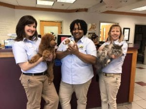 Staff holding dogs and cat