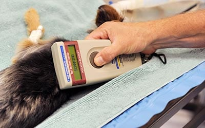 dog having its microchip checked