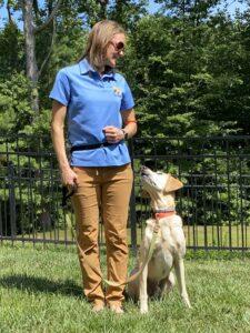 jasey training dog