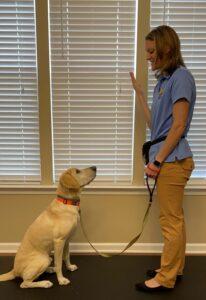 jasey training dog to sit