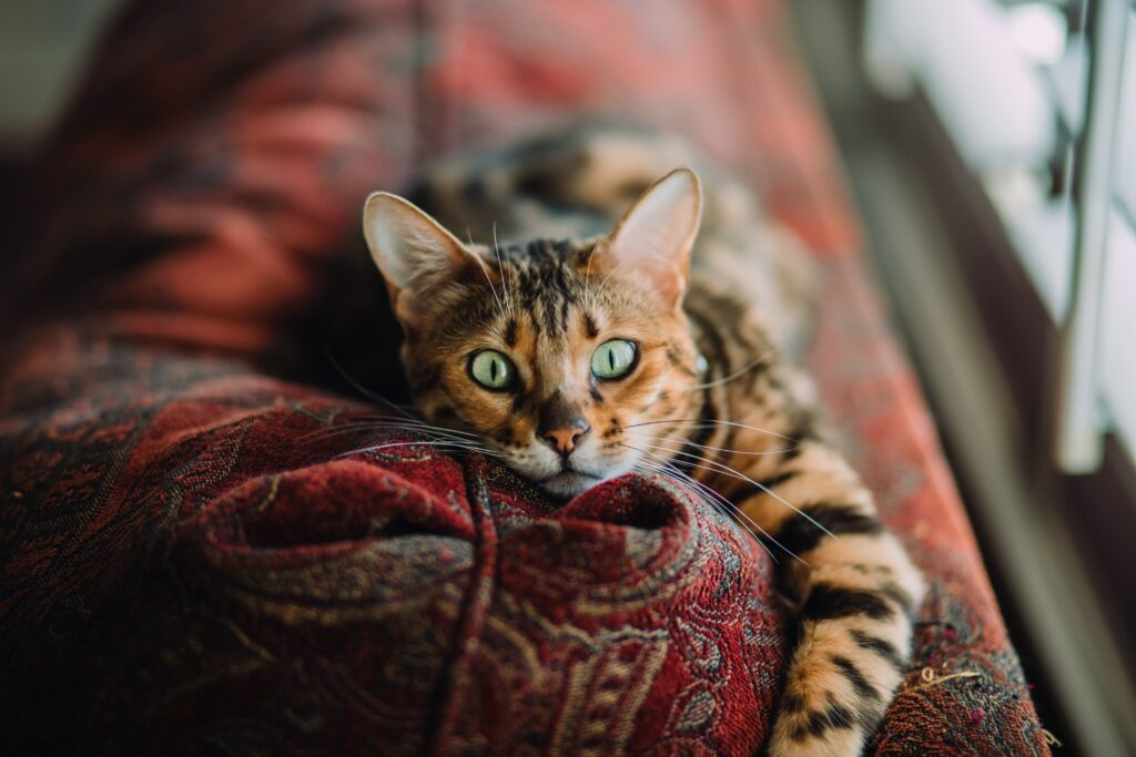 cat laying on couch